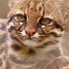Associação Mata Ciliar, uma referência na reabilitação da fauna silvestre