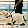 Cão-Guia e o deficiente visual: Dicas