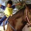 Equoterapia: Treinamento dos animais